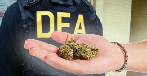 dea-chief-retreats-on-marijuana-war-1