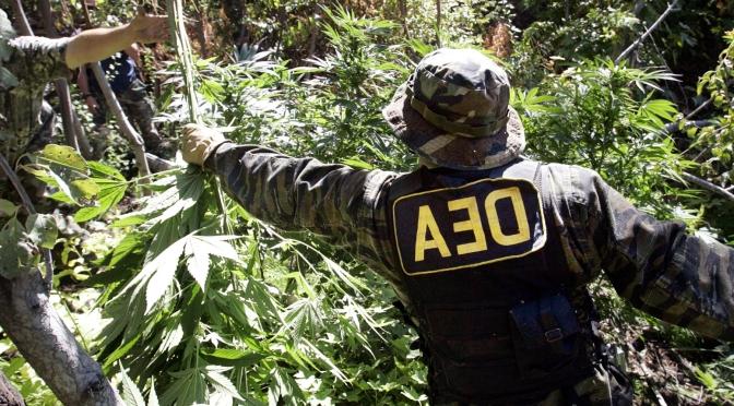 """JAV """"Narkotikų kontrolės administracija"""" (DEA) pagaliau pašalino visą melagingą informaciją apie kanapes!"""