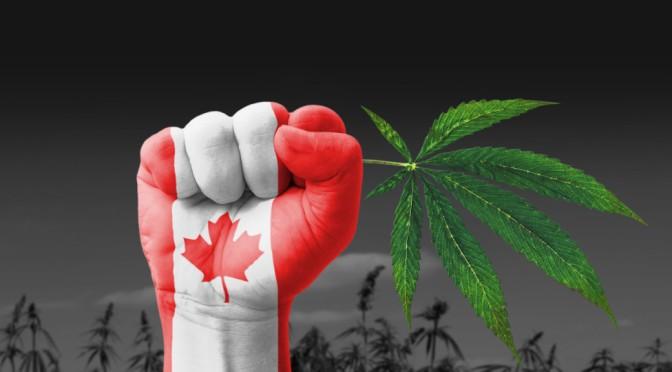 Kanada nesnaudžia ir juda link visiško kanapių legalizavimo suaugusiems!