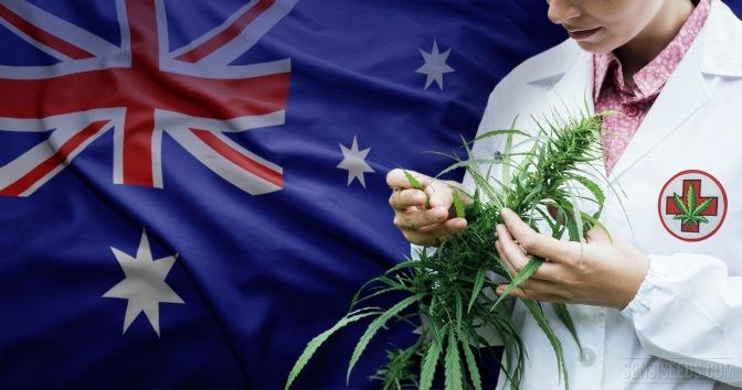 Australijos medicininių kanapių plantacija