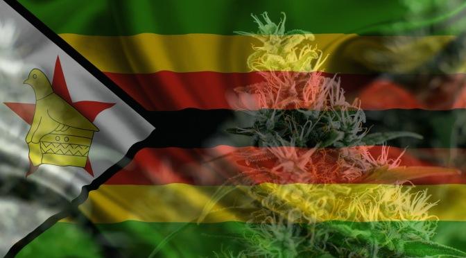 Zimbabvė tapo antrąja Afrikos valstybe, įteisinusia medicininį kanapių naudojimą
